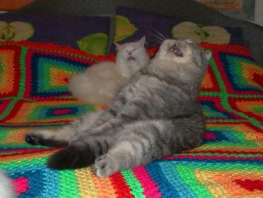 хуево котам в понедельник