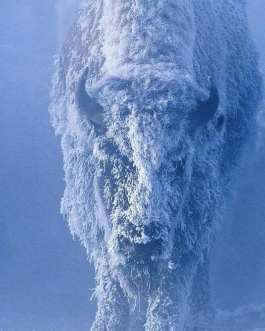 морозно сегодня. блять