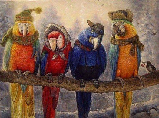 попугаям нехолодно