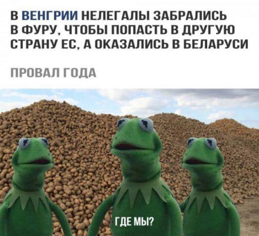 нелегалы в беларуси