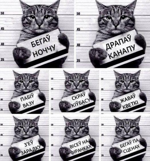 пизда коту
