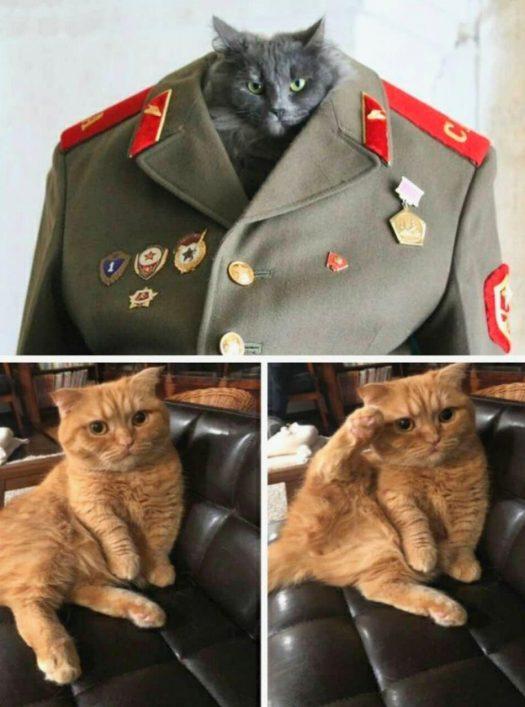 коты на 9 мая