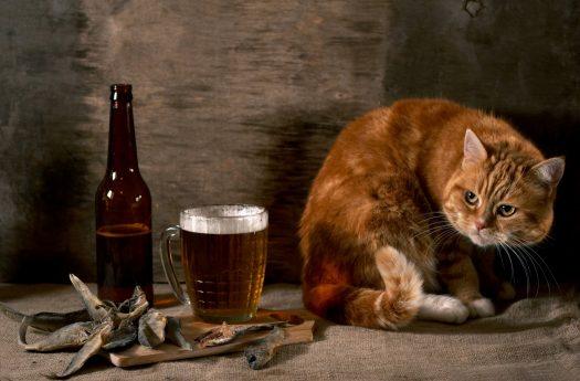 пивасик и котик