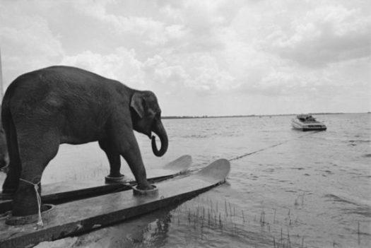 слон на лыжах
