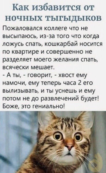 намочи коту хвост