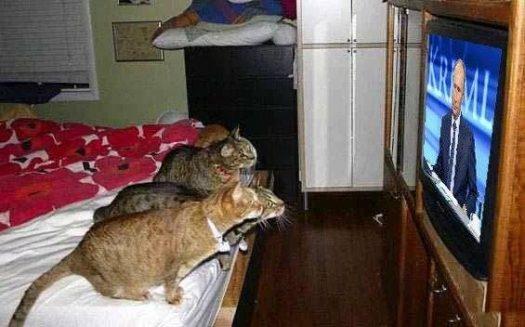 коты смотрят путина