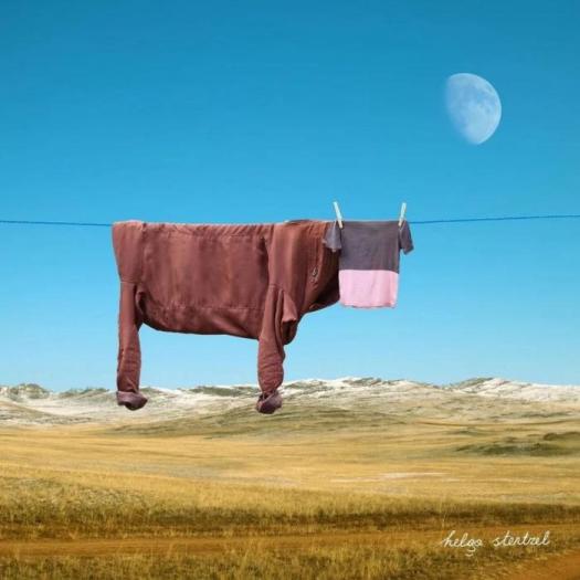 корова на веревке