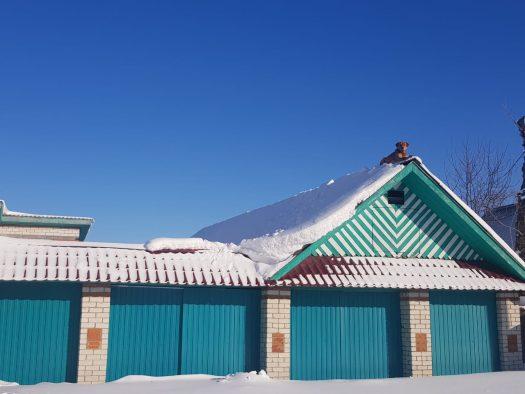 собака на снежной крыше