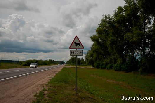 Фотографии Бобруйска: знак животных